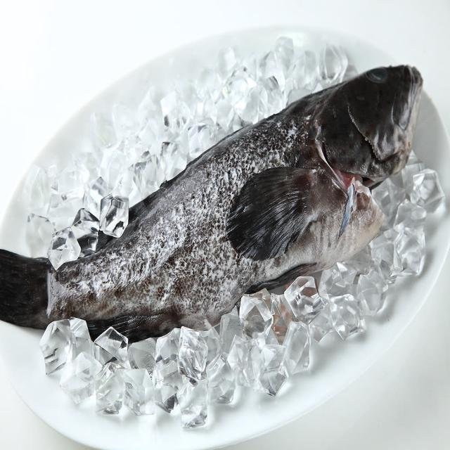 【華得水產】特大青斑石斑魚2尾(500-600g/尾)